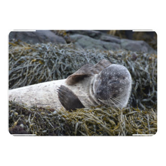 Seal Scratching an Itch 13 Cm X 18 Cm Invitation Card