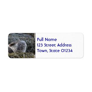 Seal Scratching an Itch Return Address Label