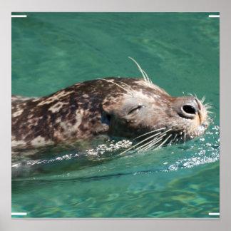 Seal Swimming Print