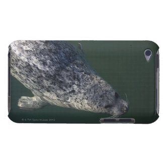 Seal swimming under the water 2 iPod touch cases