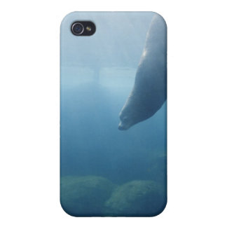 Seal swimming under the water iPhone 4/4S case
