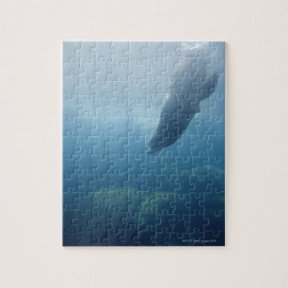 Seal swimming under the water jigsaw puzzle