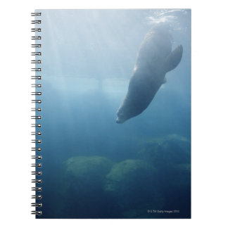 Seal swimming under the water notebook
