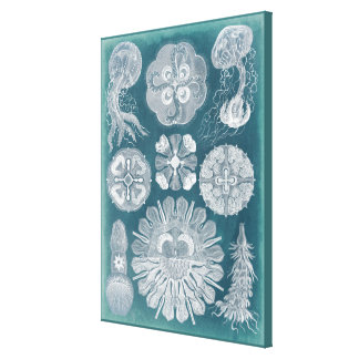 Sealife Blueprint IV Canvas Print