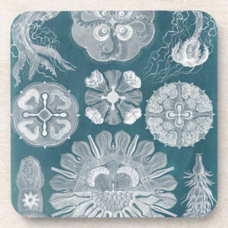 Sealife Blueprint IV Coaster