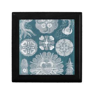 Sealife Blueprint IV Gift Box
