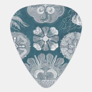 Sealife Blueprint IV Plectrum