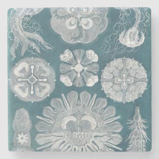 Sealife Blueprint IV Stone Coaster