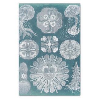 Sealife Blueprint IV Tissue Paper