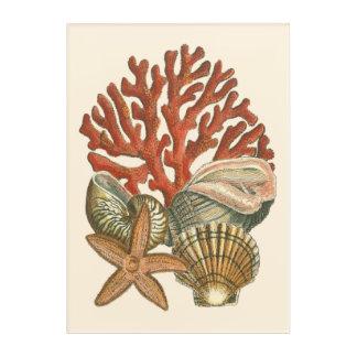 Sealife Collection Acrylic Print