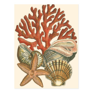 Sealife Collection Postcard