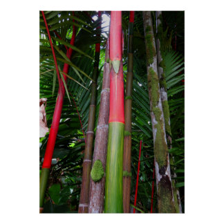 Sealing Wax Palm Poster