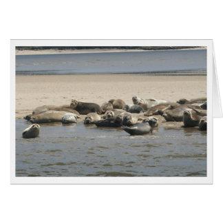 Seals Card