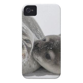 Seals Case-Mate iPhone 4 Cases