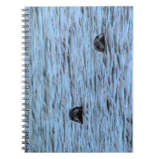 Seals in Orkney (Scotland) Notebooks