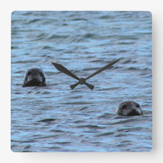 Seals in Orkney (Scotland) Square Wall Clock