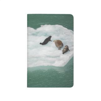 Seals on an Iceberg Journal