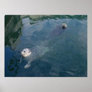 Seals Posters
