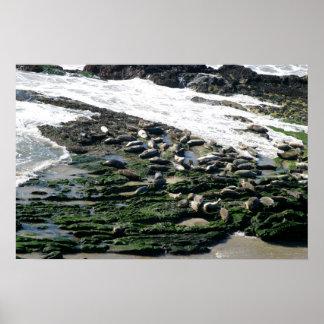 Seals Poster