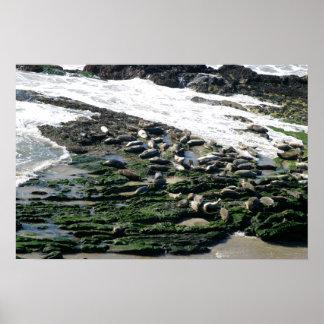 Seals Print