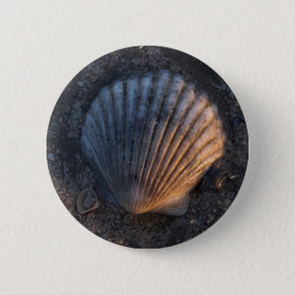 Seashell 6 Cm Round Badge