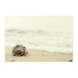Seashell Alone On Beach Acrylic Print