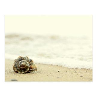 Seashell Alone On Beach Postcard
