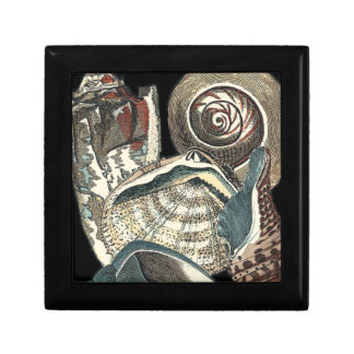 Seashell Anthology Gift Box