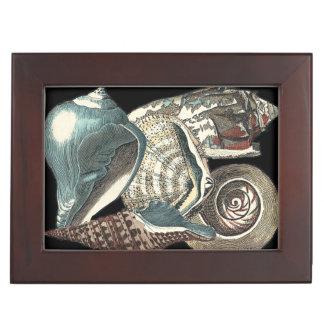 Seashell Anthology Keepsake Box