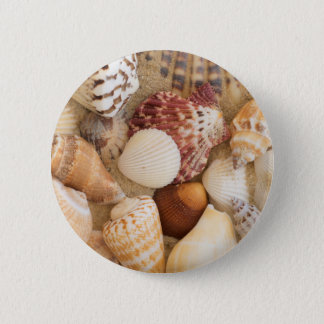 Seashell Arrangement 6 Cm Round Badge