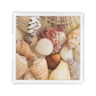 Seashell Arrangement Acrylic Tray