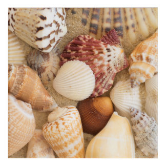 Seashell Arrangement Acrylic Wall Art