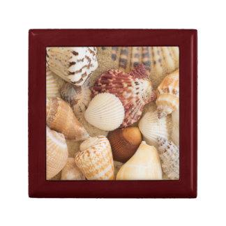 Seashell Arrangement Gift Box