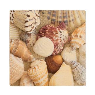 Seashell Arrangement Wood Coaster