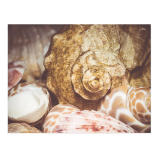 Seashell Background Macro Retro 2 Postcard