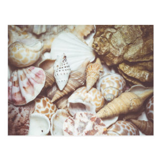 Seashell Background Macro Retro Postcard