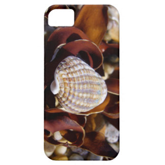 Seashell Barely There iPhone 5 Case