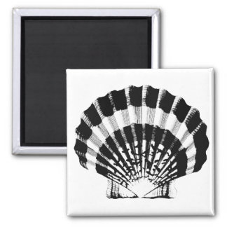 Seashell - black and white magnet