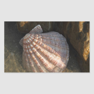 Seashell By a Rock Rectangular Sticker