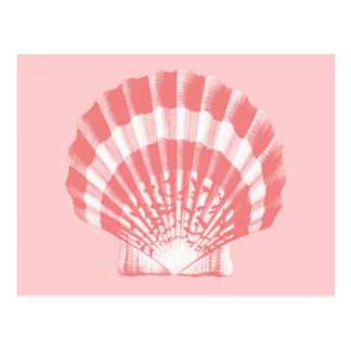 Seashell - coral pink and white postcard