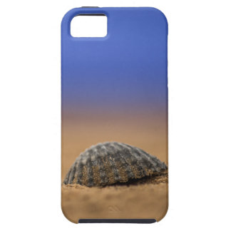Seashell iPhone 5 Case