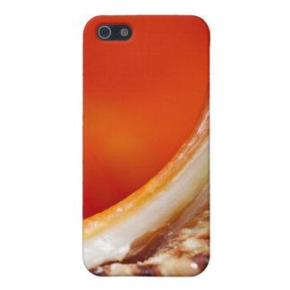 Seashell Macro - iPhone 4 Case