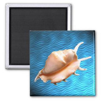 Seashell Magnet