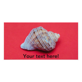 Seashell on a red background personalised photo card