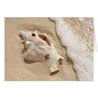 Seashell On Beach | Grand Turk Caribbean Island Card