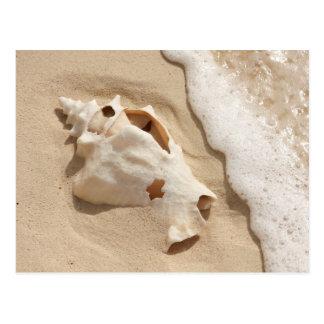 Seashell On Beach   Grand Turk Caribbean Island Postcard