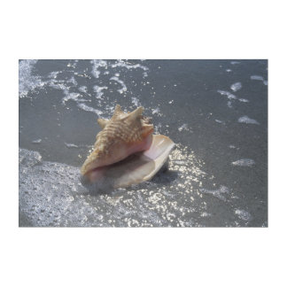 Seashell On Beach | Sanibel Island, Florida Acrylic Wall Art