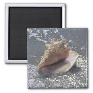 Seashell On Beach | Sanibel Island, Florida Magnet