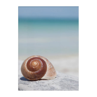 Seashell On Beach | St. Petersburg, Fl Acrylic Wall Art