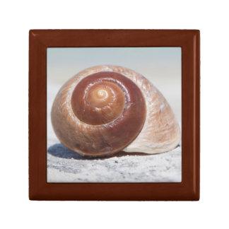 Seashell On Beach | St. Petersburg, Fl Gift Box